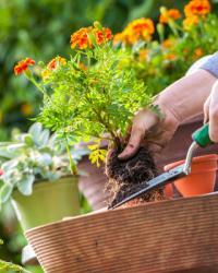 Plantes et fleurs pour particuliers